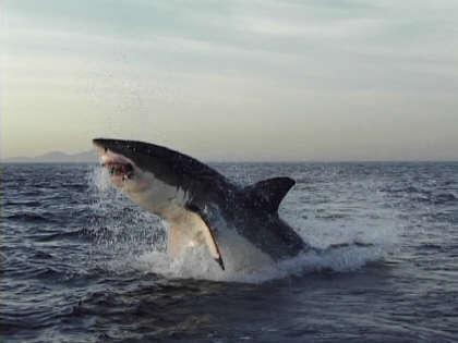 shark23232 12 Fotografias Manipuladas mais Conhecidas da História