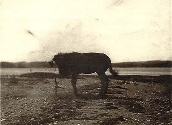 1881 mule 10 Fotografias Cientificas e Bizarras do Século XIX